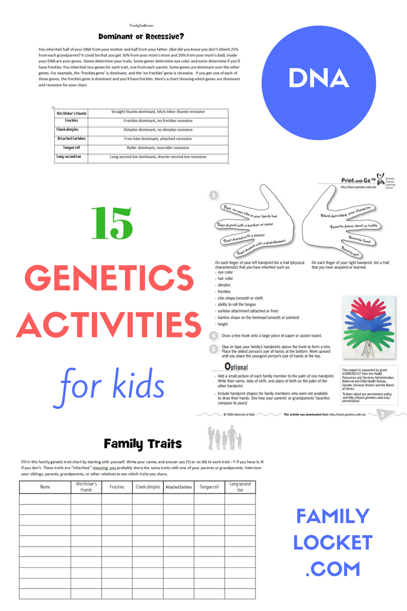 genetics worksheets for middle schoolers genetics best free printable worksheets. Black Bedroom Furniture Sets. Home Design Ideas