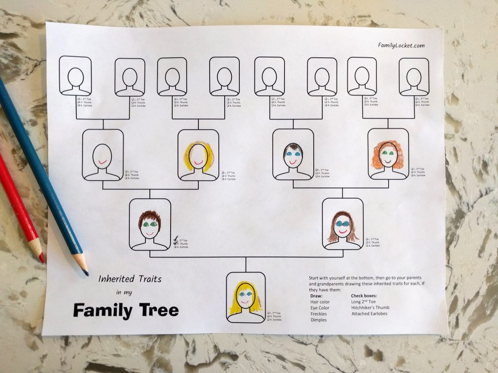 Worksheets Inherited Traits Worksheet inherited traits family tree worksheet locket i created another to go along with the table that helps children gather data about from their members