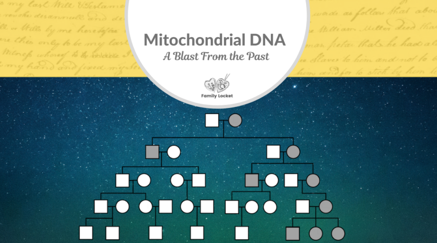 Mitochondrial DNA – A Blast From the Past