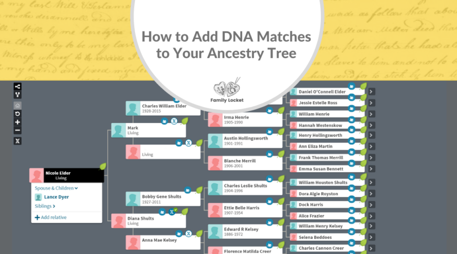 How to Add DNA Matches to Your Ancestry Tree