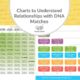 Charts to Understand Relationships with DNA Matches